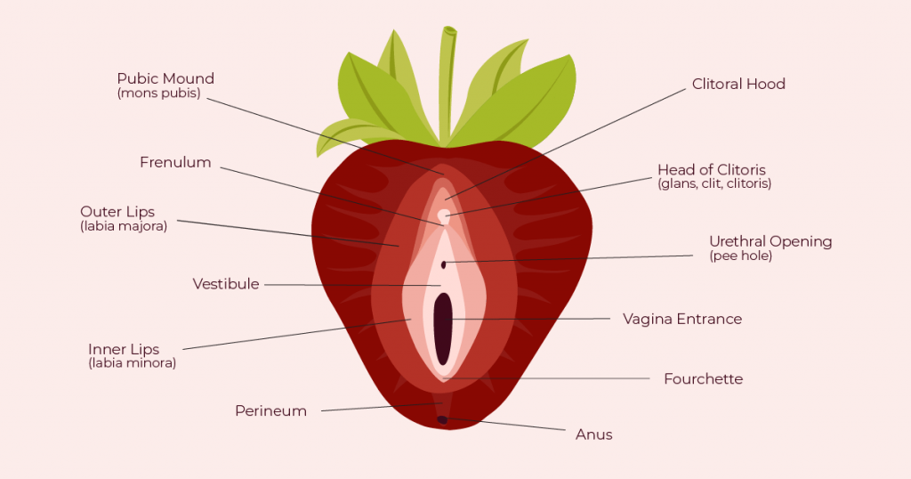 Strawberry Vulva diagram from The Cunnilinguist #TheCunnilinguist